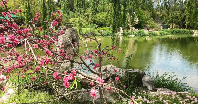Our Visit to the Huntington Library and Botanical Gardens